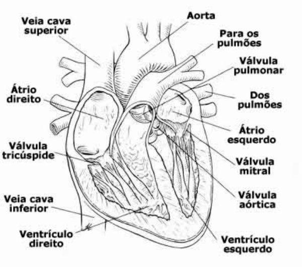 Infarto Causas Sintomas orgão