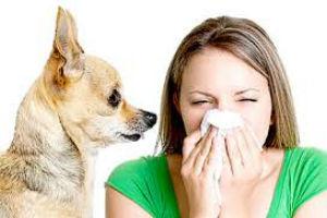 Gripe Resfriado e Alergia