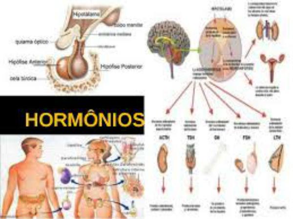 hormônios lamina